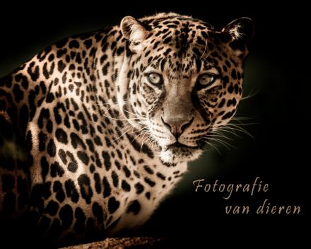 Je website als blikvanger met foto's die zeggen wat je doet_fotografie van dieren